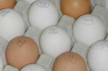 site12-eier-gestempelt.jpg
